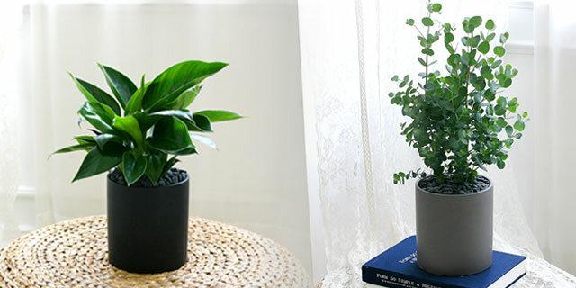 [미세먼지의 계절] 모던 공기정화식물