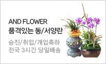 [전국꽃배달서비스] 앤드플라워 승진/취임/축하선물 동서양란