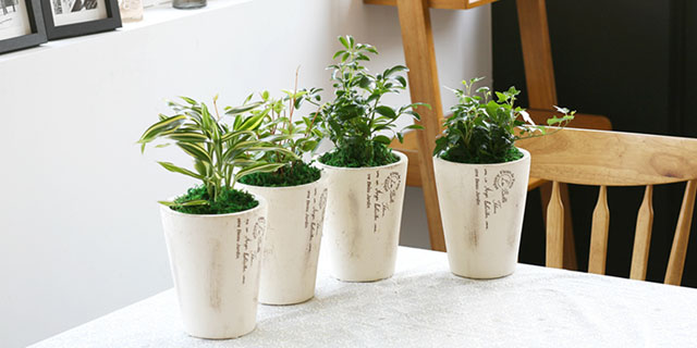 [Table Garden] 공기정화 식물전