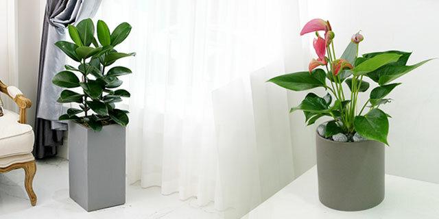 [봄맞이 미세먼지 제거] 공기정화식물