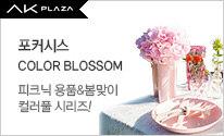 포커시스 Colourful Blossom