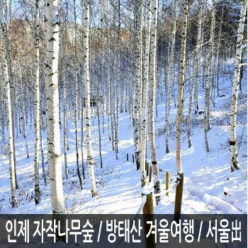 [강원] 인제 자작나무숲+방태산 자연휴양림 당일여행 / 원대리/눈꽃여행/겨울여행/서울出